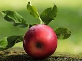 Apfelpektin ist ein veganes Geliermittel