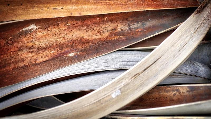 Die Palmblattbibliothek: Was Sie über die geheimnisvollen Blätter wissen sollten