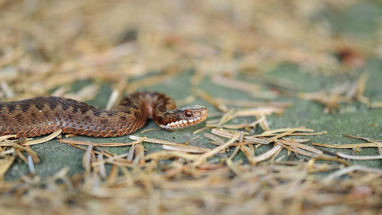 Richtiges Verhalten bei einer Schlange im Garten