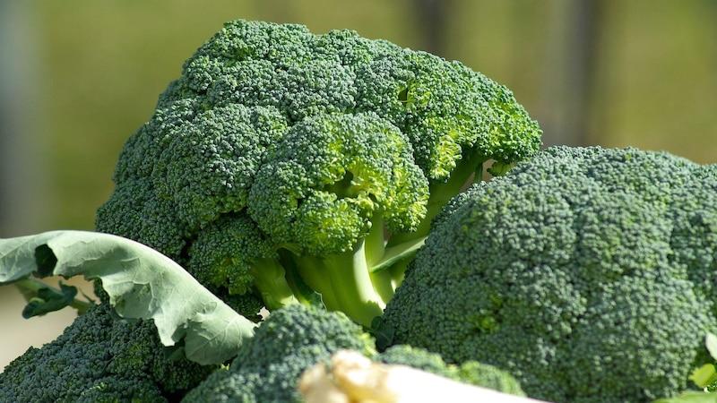 Brokkoli: Der hohe Nährstoffgehalt macht das Gemüse besonders Gesund für Ihren Körper