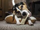 Frisst Ihr Hund alles, was er beim Gassigehen findet, dann weiß Martin Rütter Rat