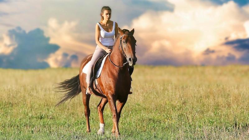 Pferdemark Gewinnung: Was genau ist Pferdemark in Pflegeprodukten?