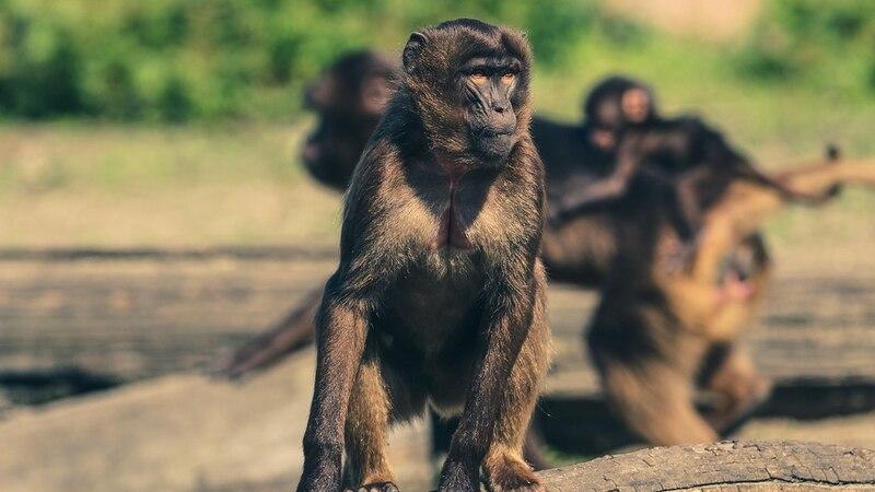 Affe als Haustier halten: Was Sie darüber wissen sollten