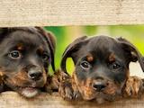 Mit Aussagen über allergikerfreundliche Hunderassen sollten Sie vorsichtig umgehen.