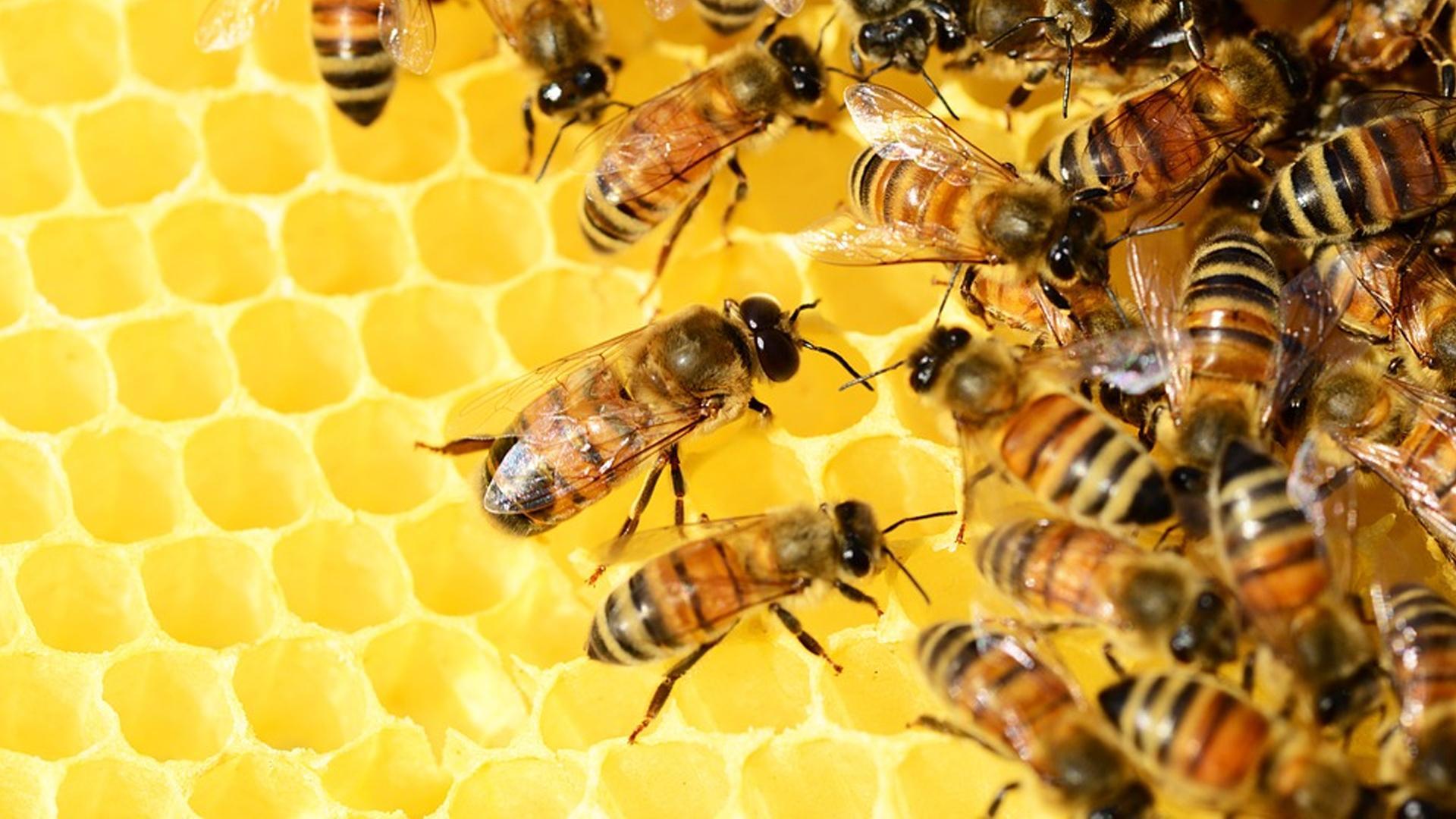 Ob Veganer Honig essen: Das erfahren Sie hier