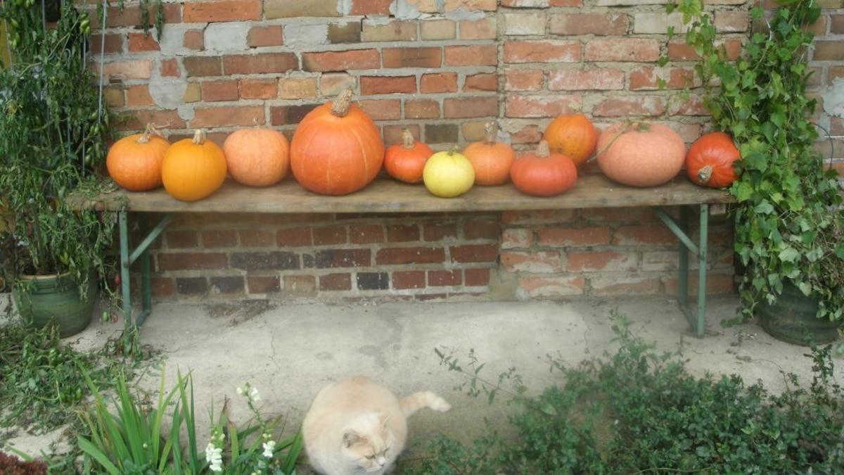 Der Herbst ist Kürbiszeit.
