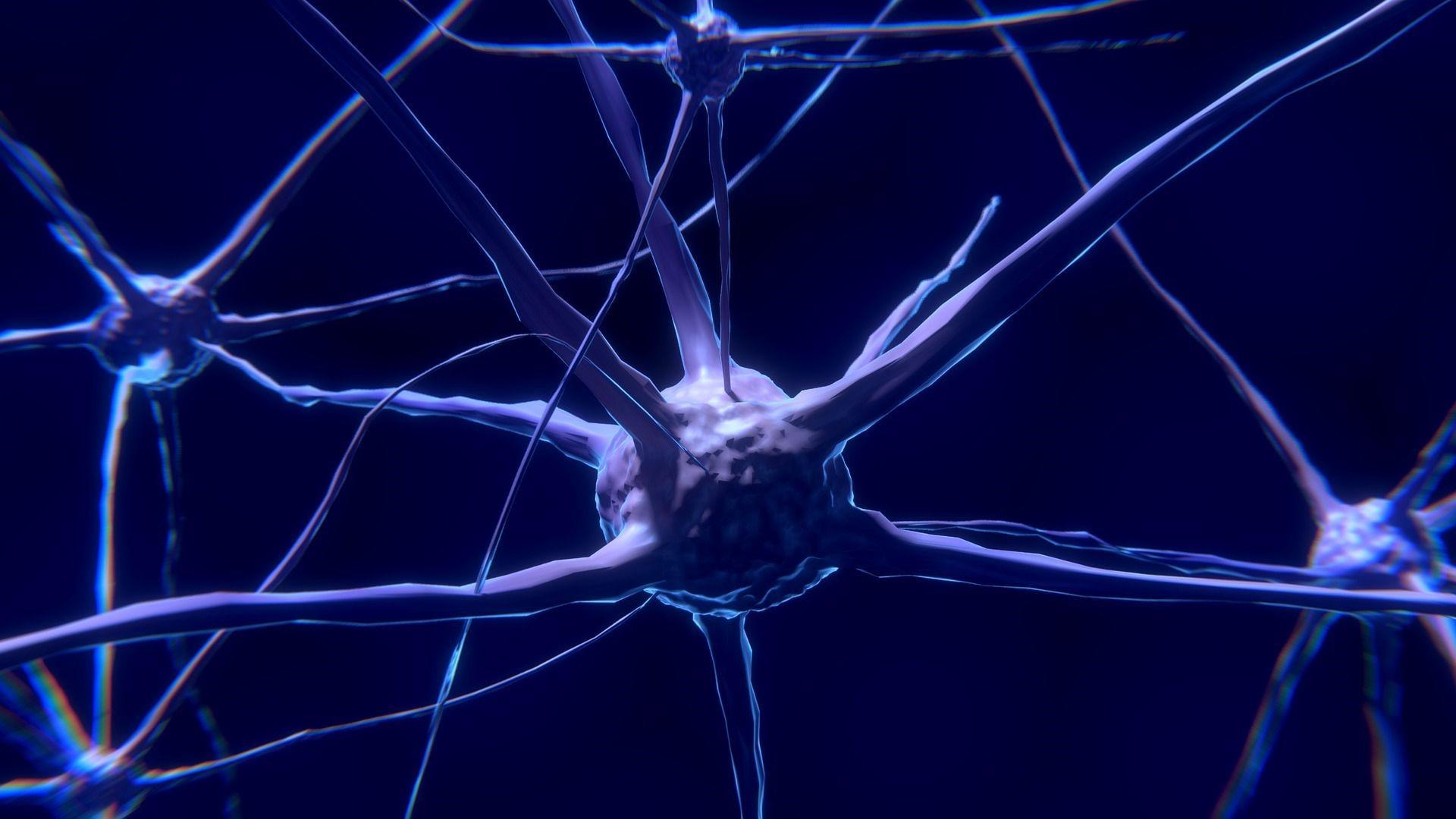 Funktion der rechten Gehirnhälfte: Einfach erklärt
