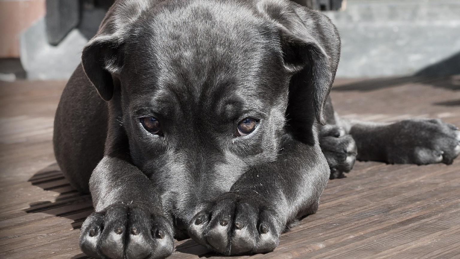 Zucchini für den Hund: Was Sie dabei beachten sollten