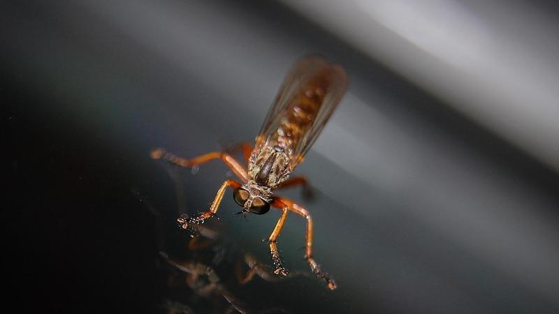 Pflanzen gegen Mücken einsetzen - so geht's