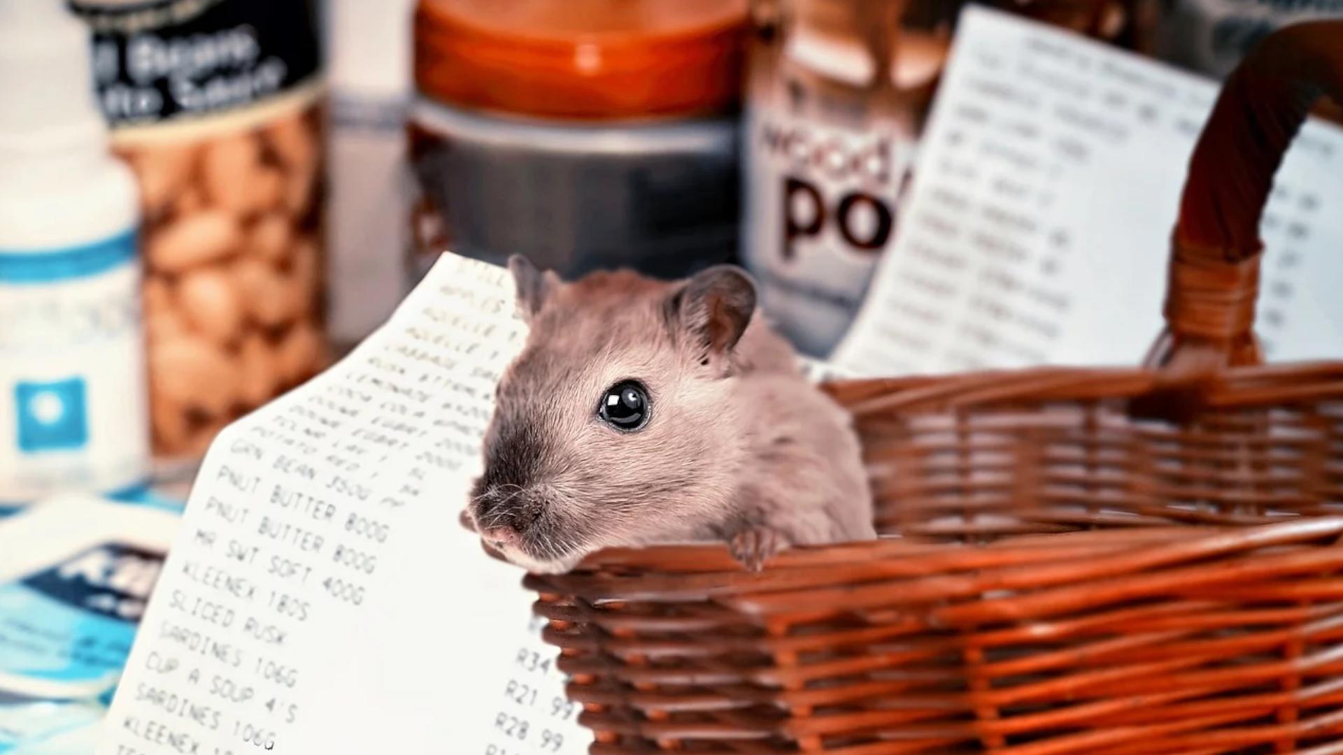 Hamsterkauf: 5 spannende Fakten zu dem Phänomen