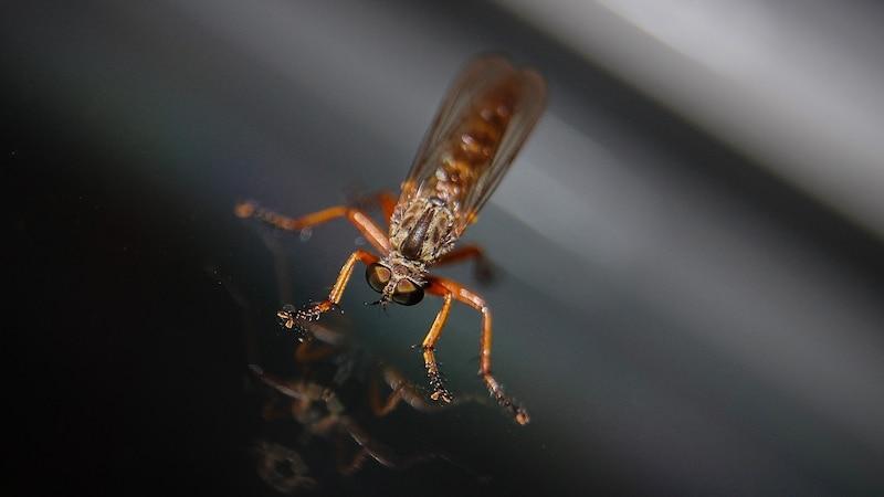 Mückenstiche: Diese Hausmittel helfen