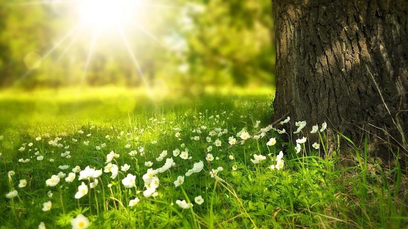 Welche Allergien im Frühling auftreten und was Sie dagegen tun können, erfahren Sie in diesem Praxistipp