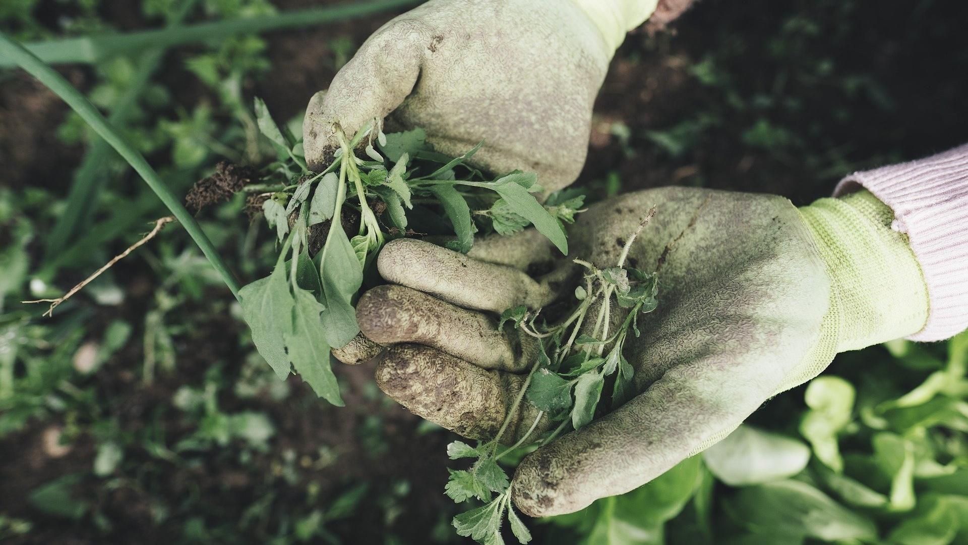 Kalorienverbrauch bei der Gartenarbeit: So viel verbrennen Sie dabei