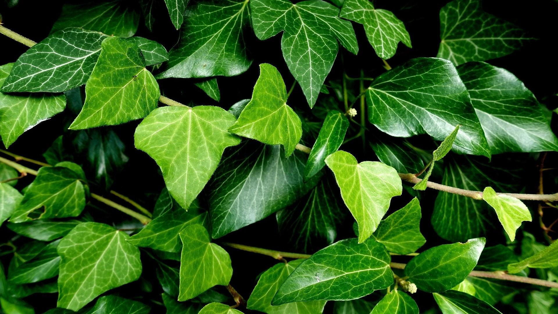 Viele beliebte Pflanzen im Garten sind für Kinder giftig.
