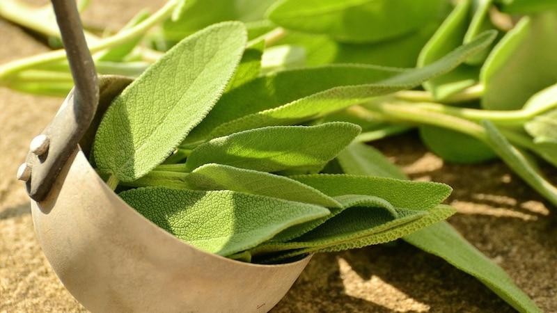 Salbei pflanzen: Anleitung für ein schnelles Wachstum