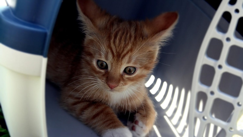 Die Katze mit in den Urlaub nehmen - Tipps, Hinweise und worauf Sie achten sollten