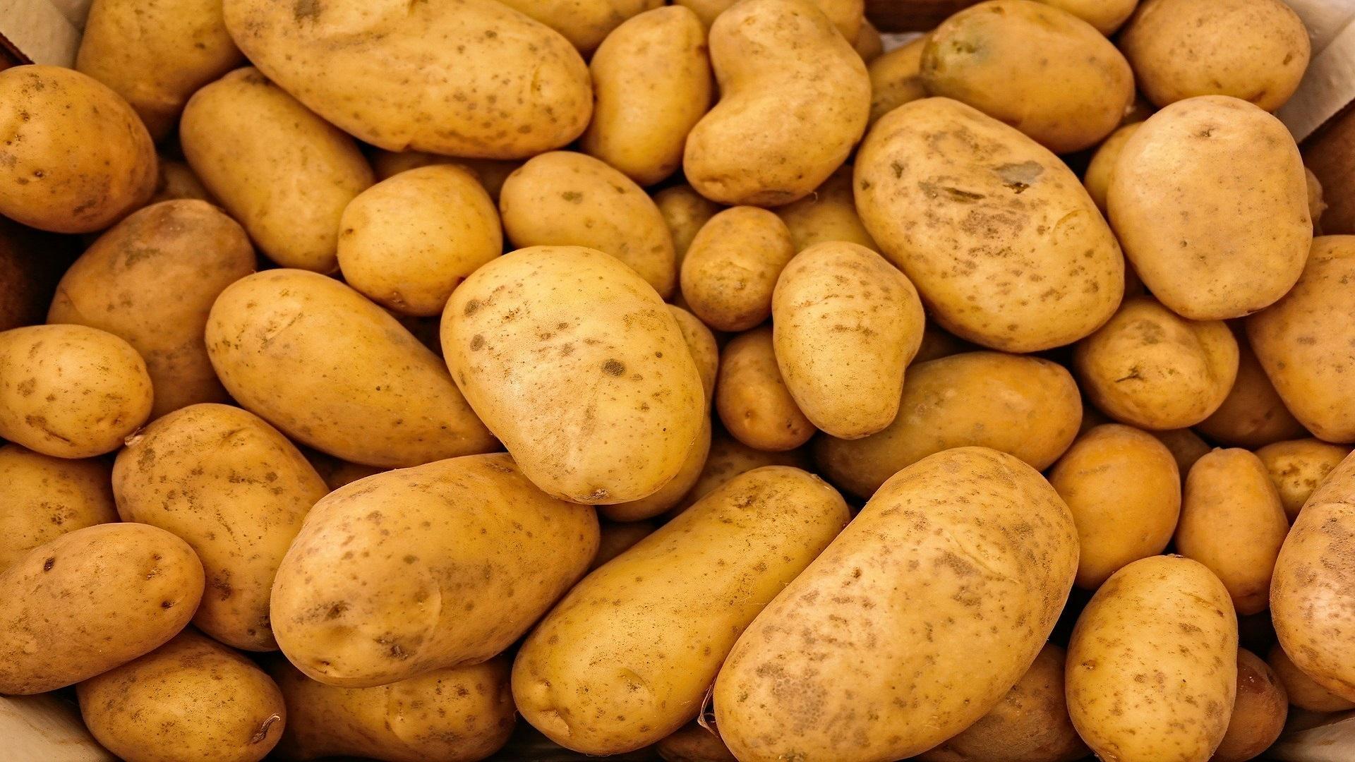 Keimende Kartoffeln – darf man sie noch essen?