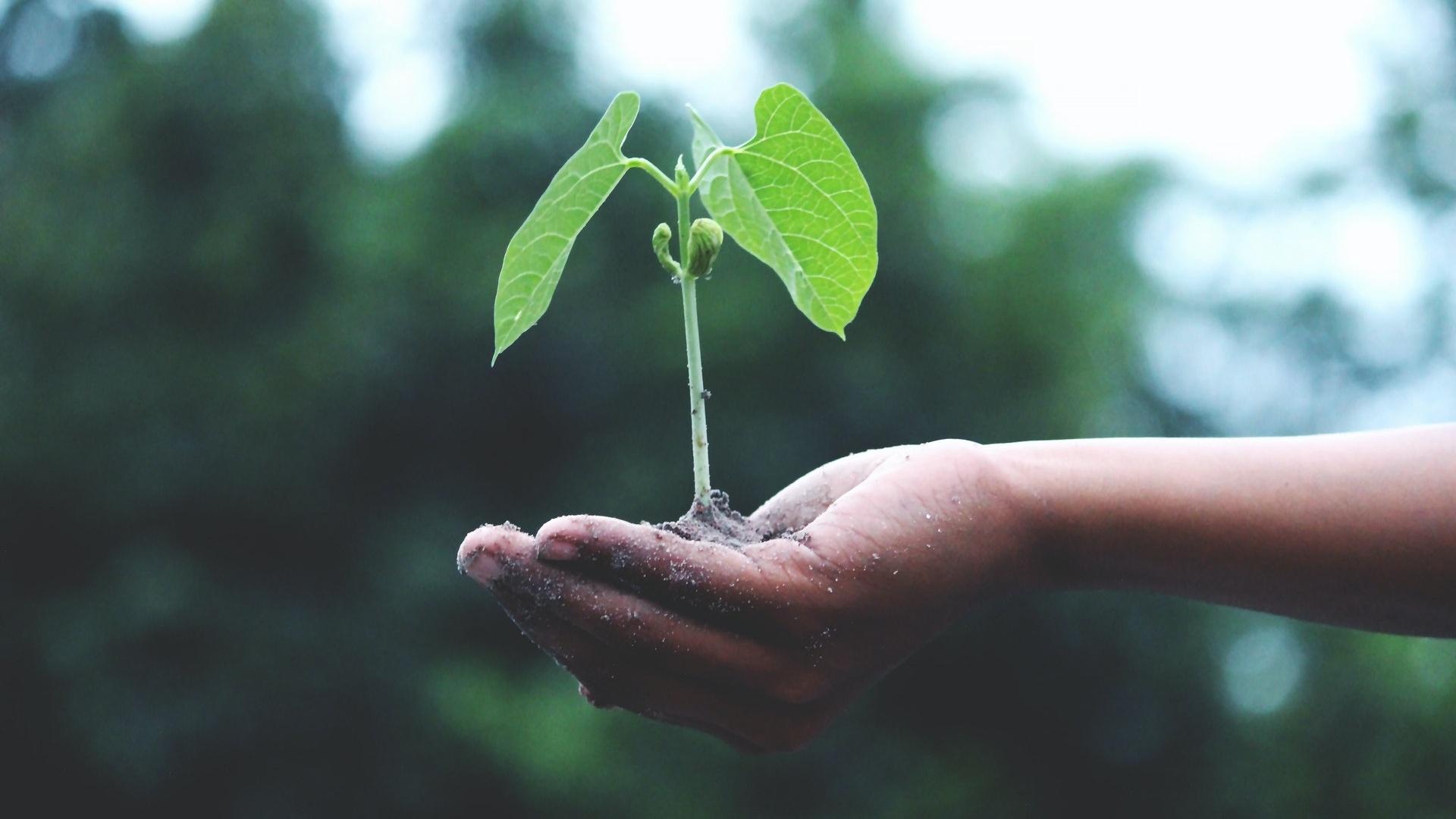 Samen stratifizieren - so geht's