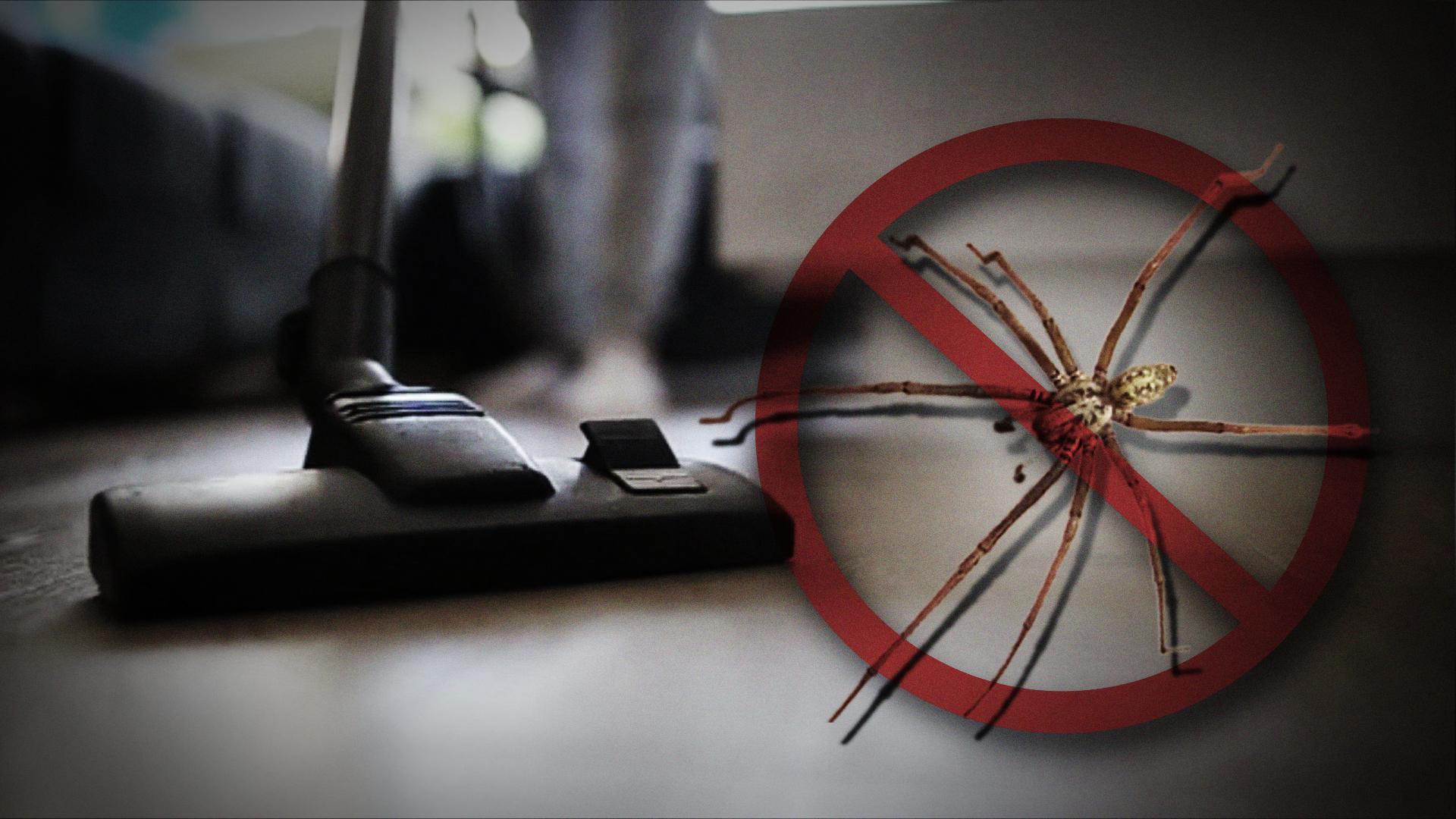 Spinne mit Staubsauger aufsaugen: Das passiert wirklich