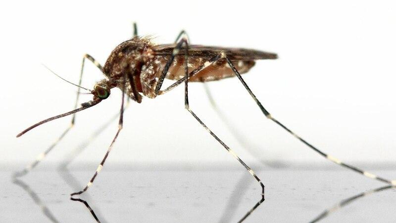 Mückenstich bei Baby: Die besten Tipps