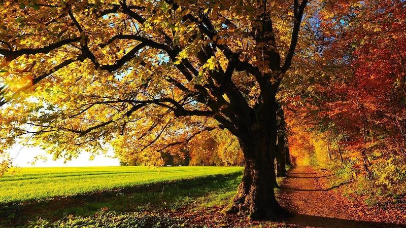 Wälder, Wiesen und landwirtschaftliche Nutzflächen können auf natürlichem Wege CO2 binden.