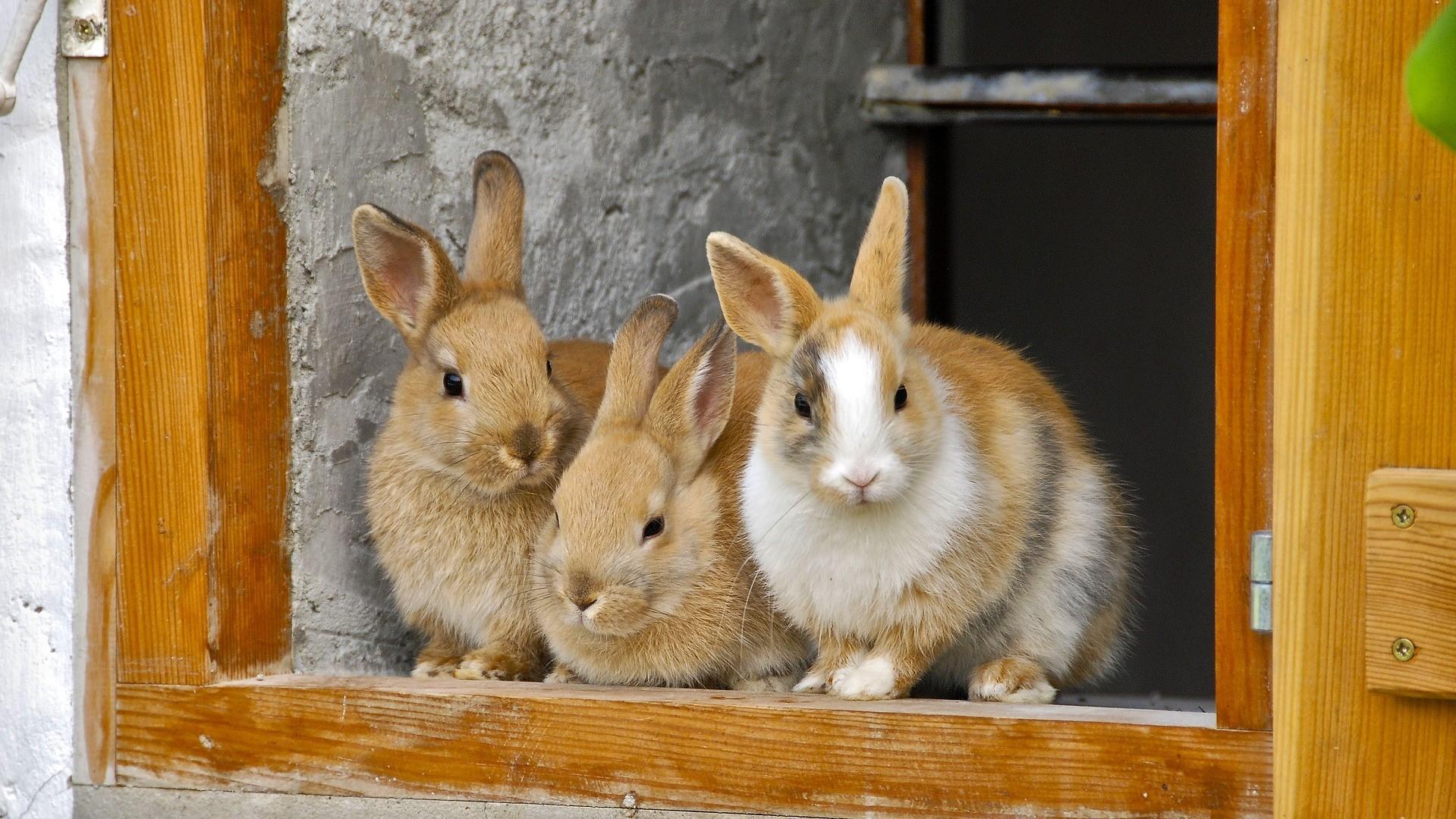 Kokzidien bei Kaninchen: Ursachen, Symptome und Behandlung