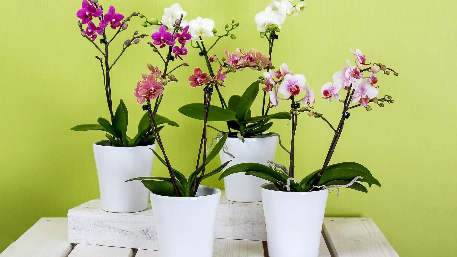 Zimmerpflanzen bestimmen: Mit diesen Möglichkeiten erkennen Sie Ihre Pflanze