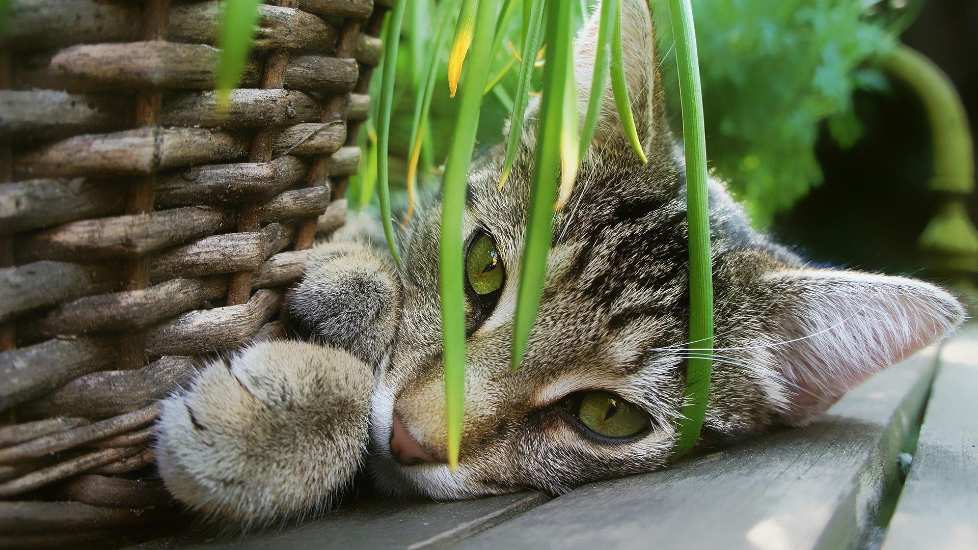 Katze abgeben im Tierheim: Gründe und wie Sie die Abgabe vermeiden
