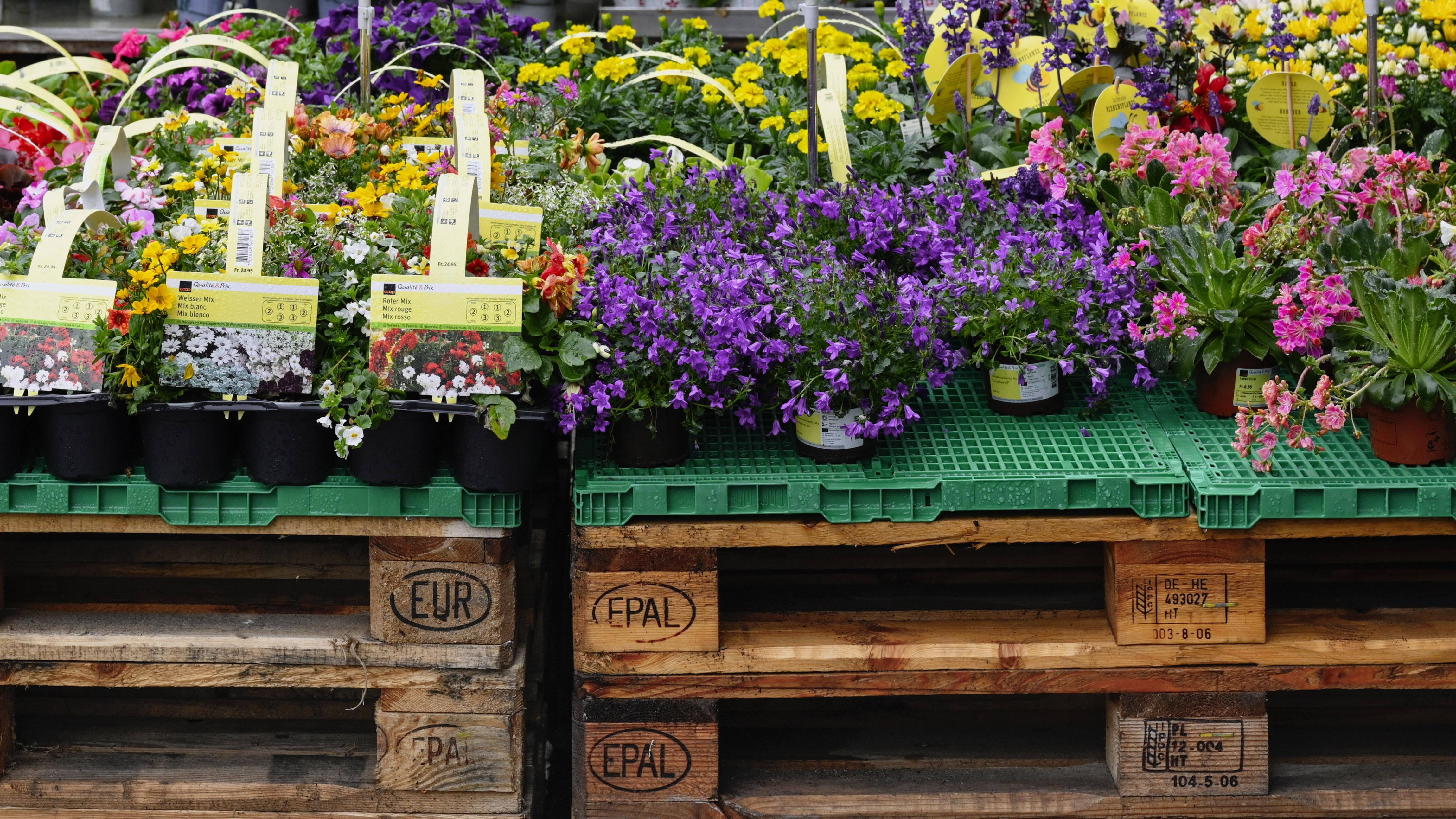 Europalette bepflanzen: So legen Sie einen vertikalen Garten an