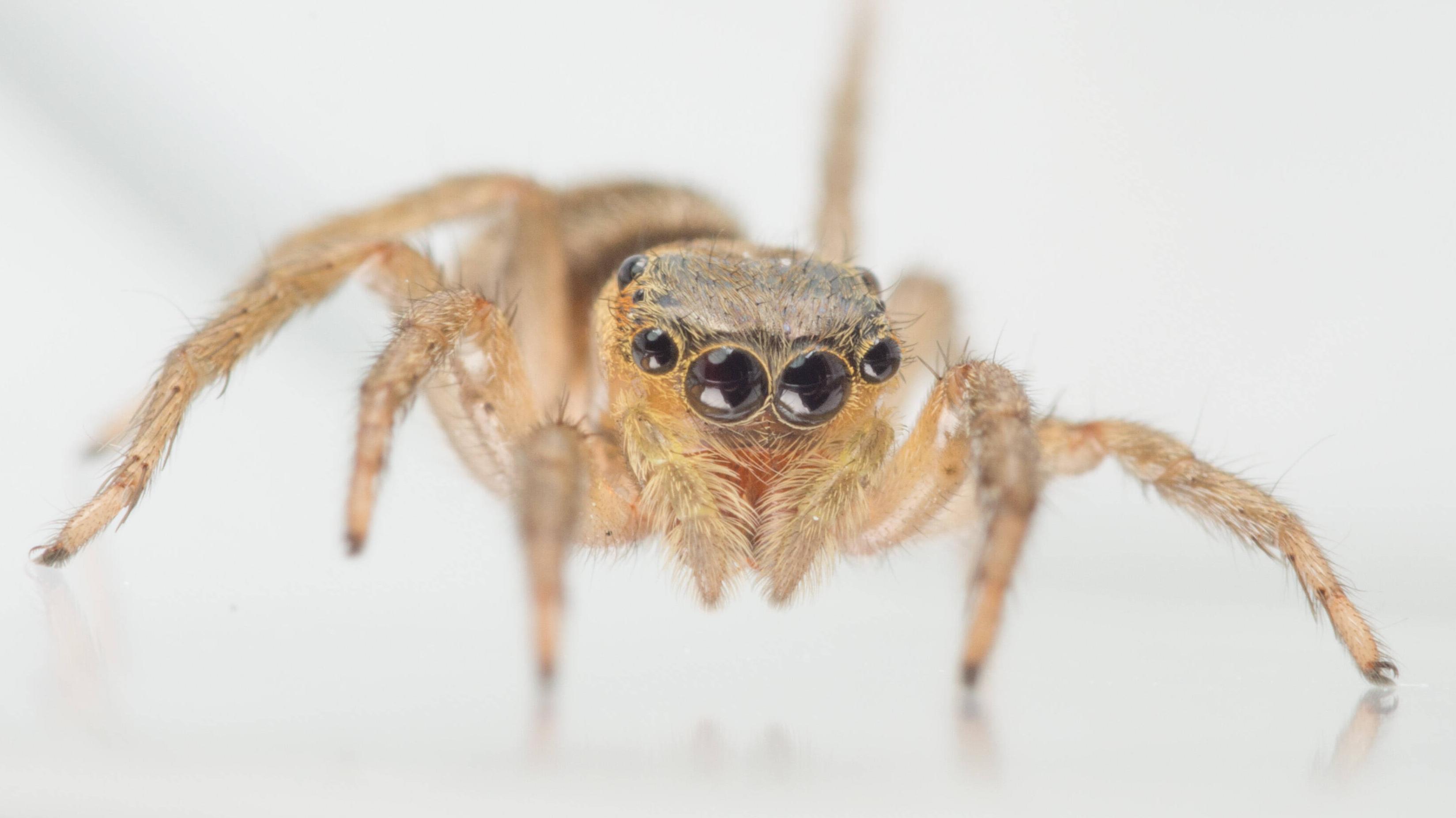 Wie viele Augen haben Spinnen? Einfach erklärt