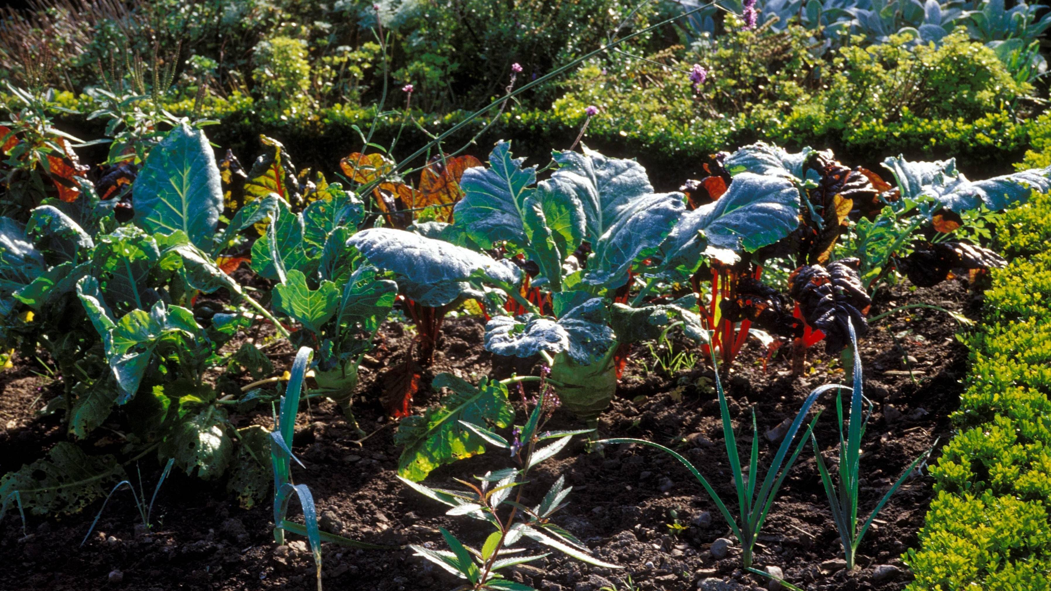 Gartenbeet anlegen: Darauf sollten Sie achten