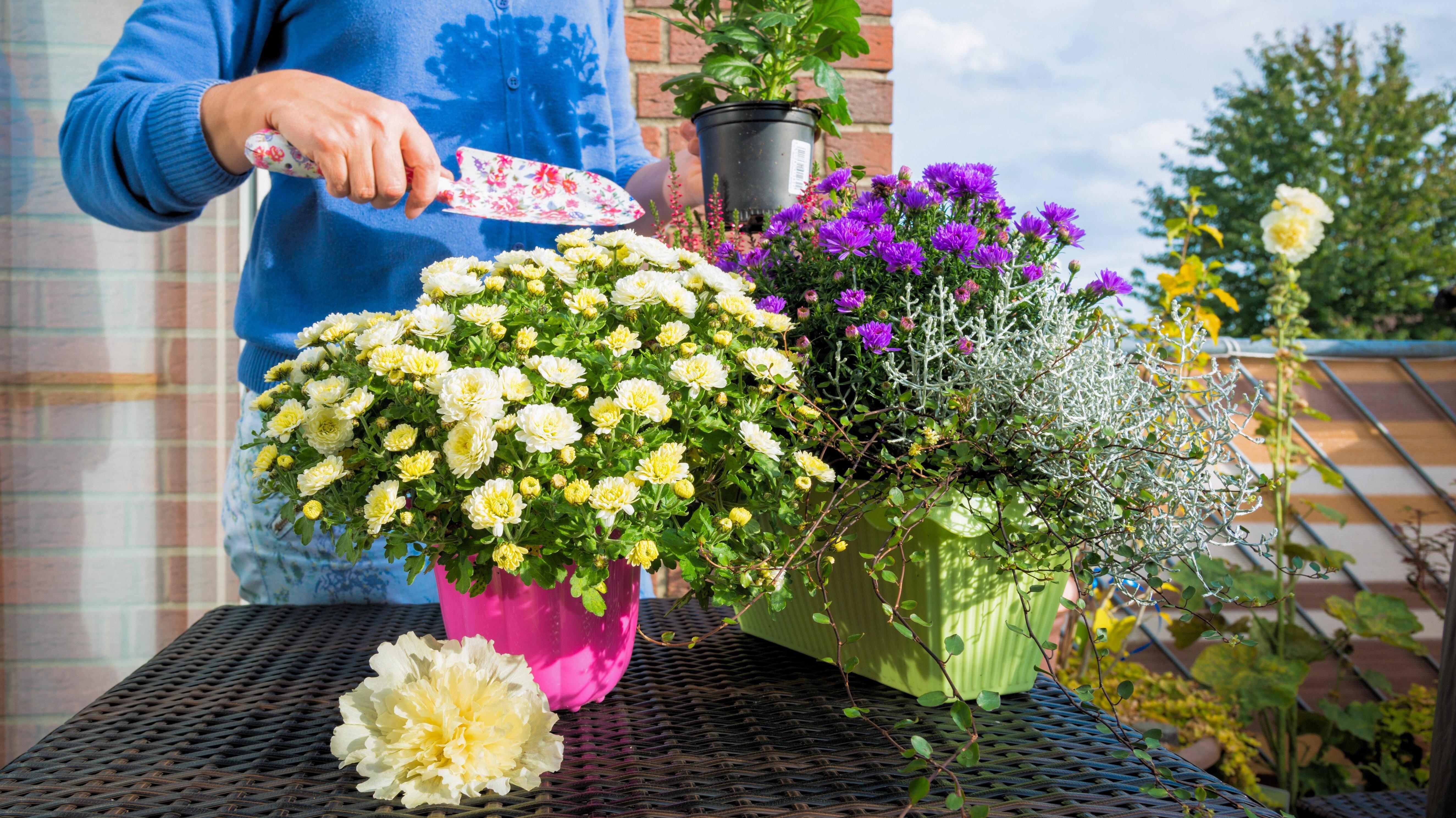 Herbstblumen für den Balkon: Diese Blumen eignen sich