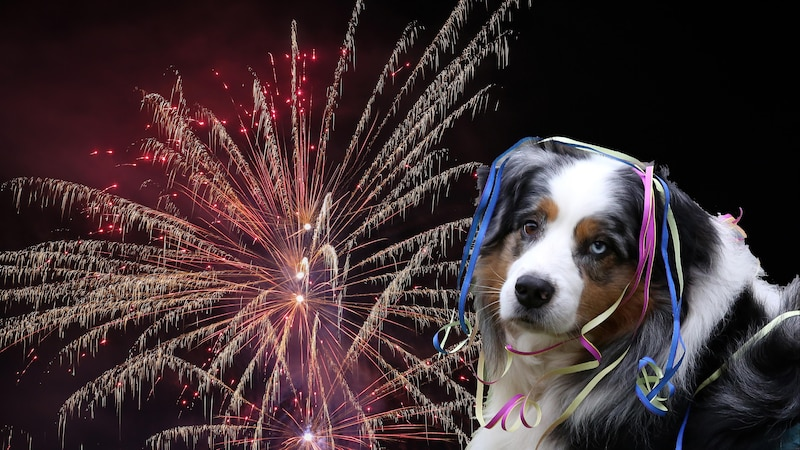 Haustiere, besonders Hunde, reagieren panisch auf laute Geräusche wie Silvesterraketen, Gewitter oder Sirenen