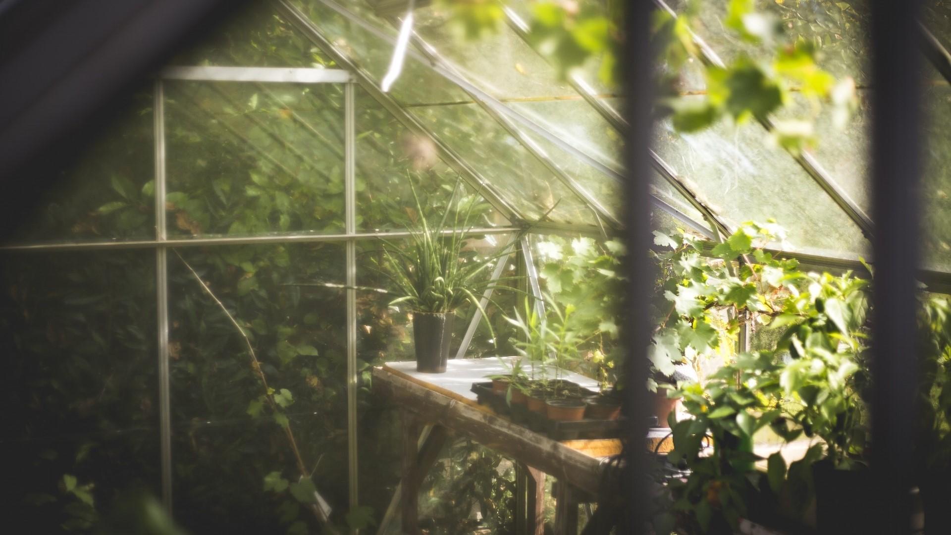 Wenn Sie Ihr Gewächshaus einrichten, sollten Sie dafür sorgen, dass Sie ideale Bedingungen für Ihre Pflanzen schaffen.