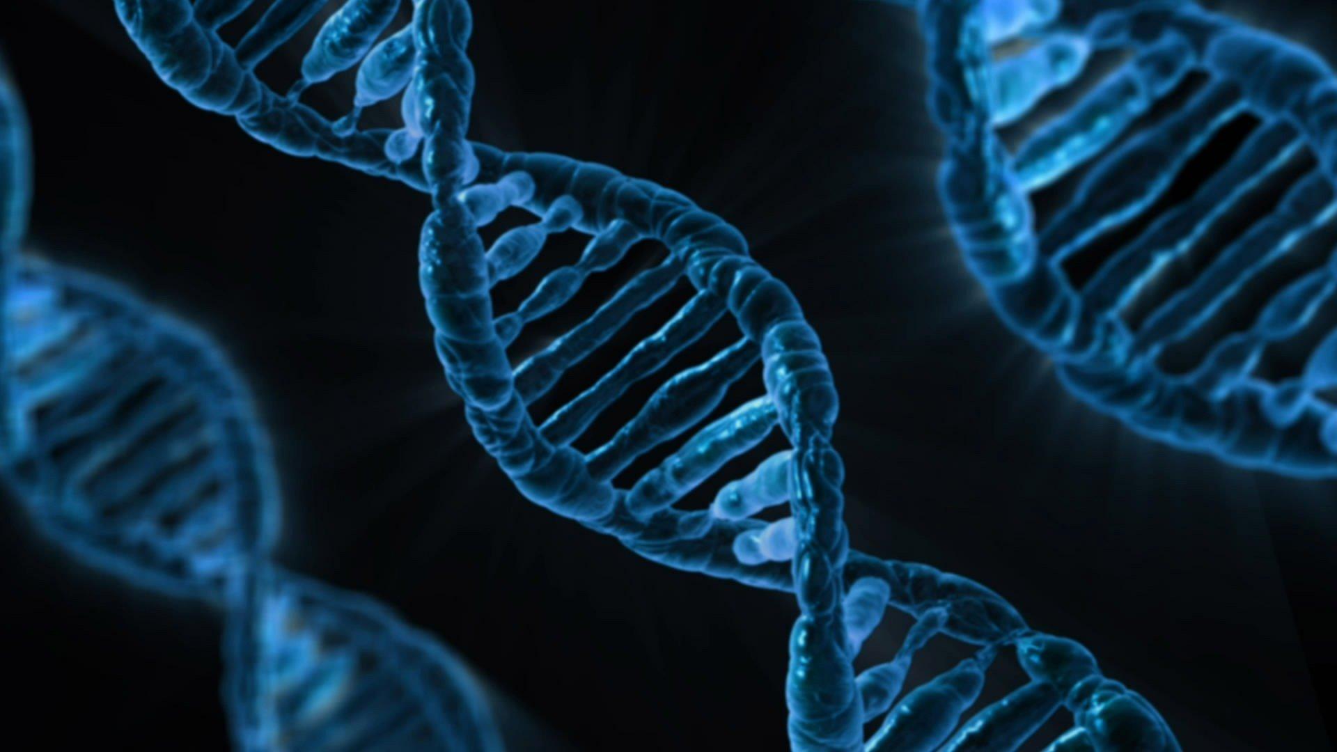 Komplementäre Polygenie ist ein Begriff aus der Genetik.