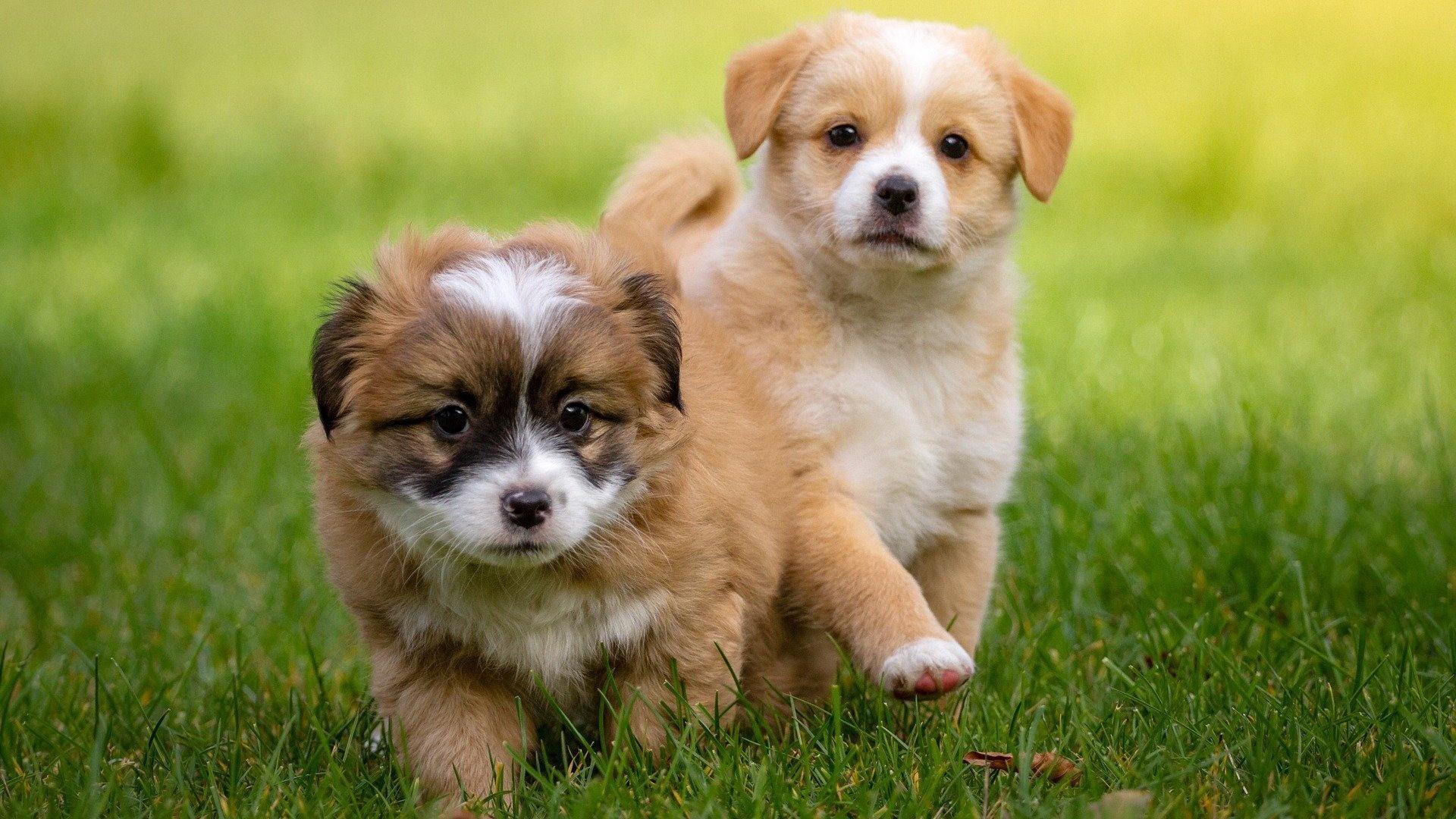 Polnische Hundenamen und ihre Bedeutung