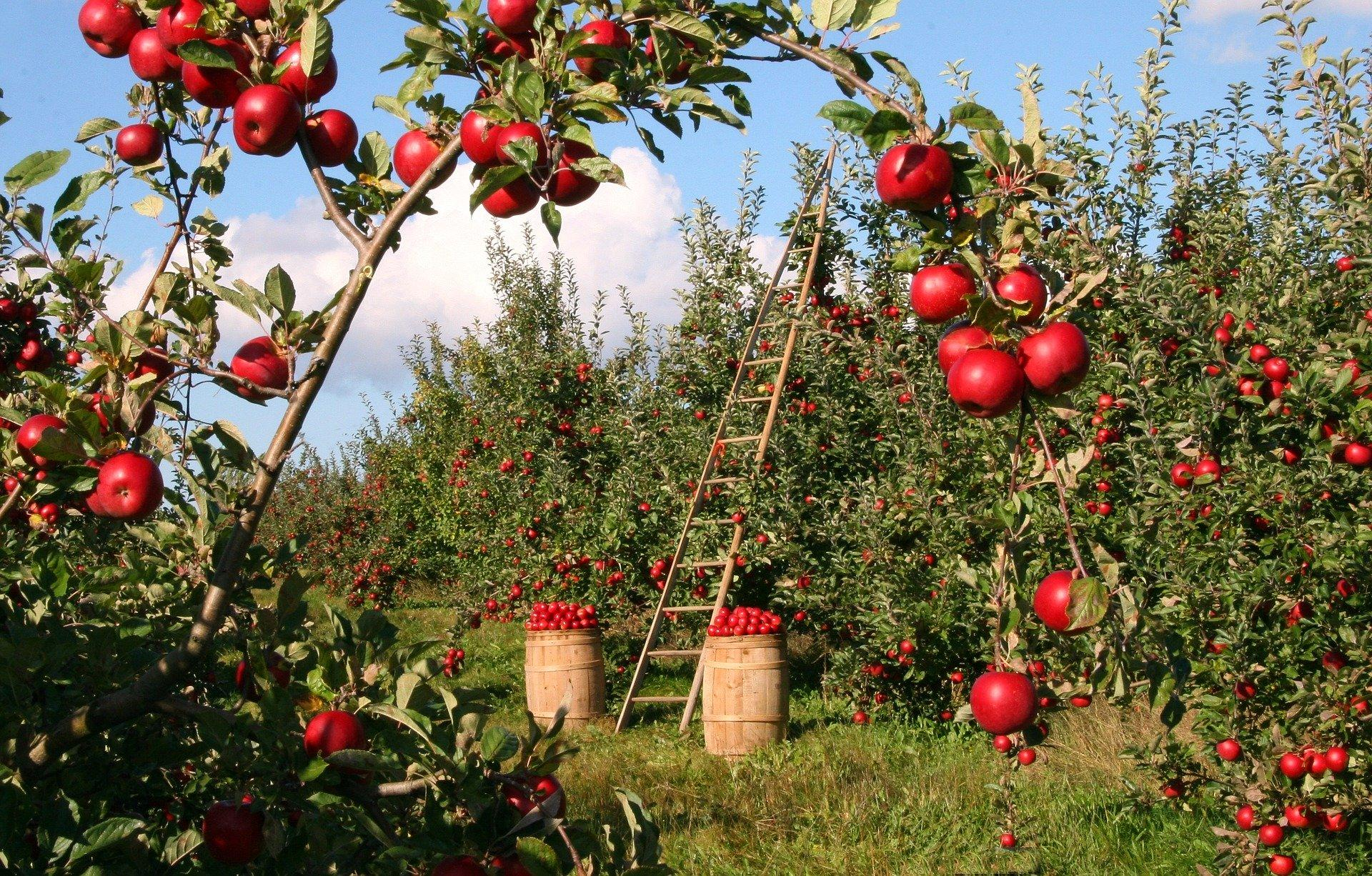 Obst aufbewahren: 5 Tipps für längere Haltbarkeit