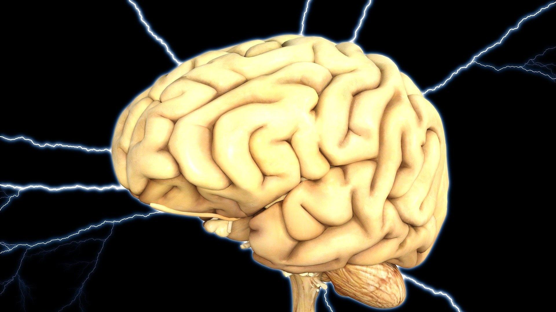 Ventrikel sind lebenswichtig für ein funktionierendes Gehirn.