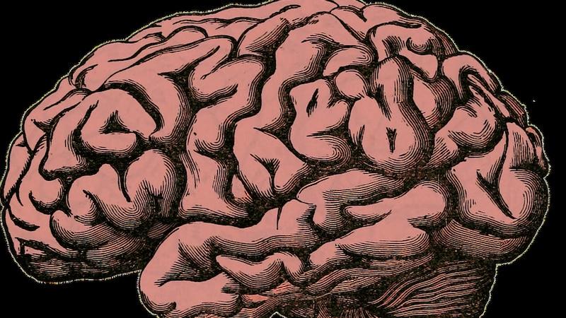 Erfahren Sie die Definition von kognitiven Fähigkeiten.