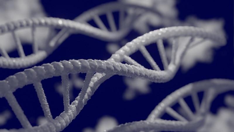 Chromosom: Funktion und Aufbau einfach erklärt