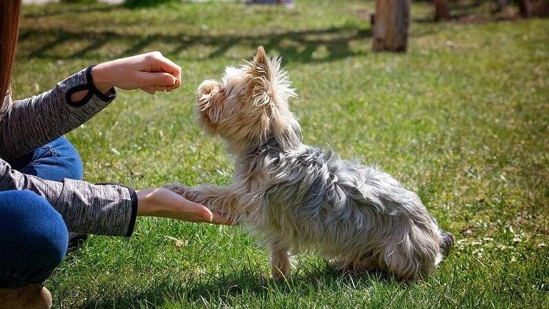 Hundeerziehung ist für Anfänger oft eine große Herausforderung