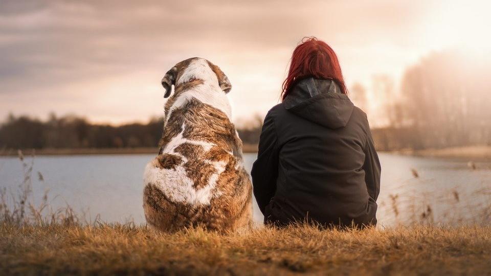 Welches Tier passt zu mir? - Diese Frage beschäftigt künftige Haustierbesitzer.