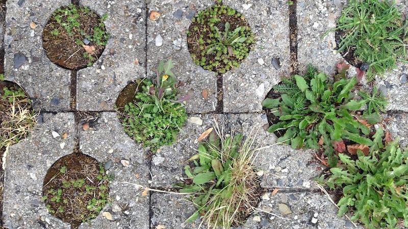 Rasengittersteine füllen und bepflanzen: Diese Möglichkeiten gibt's