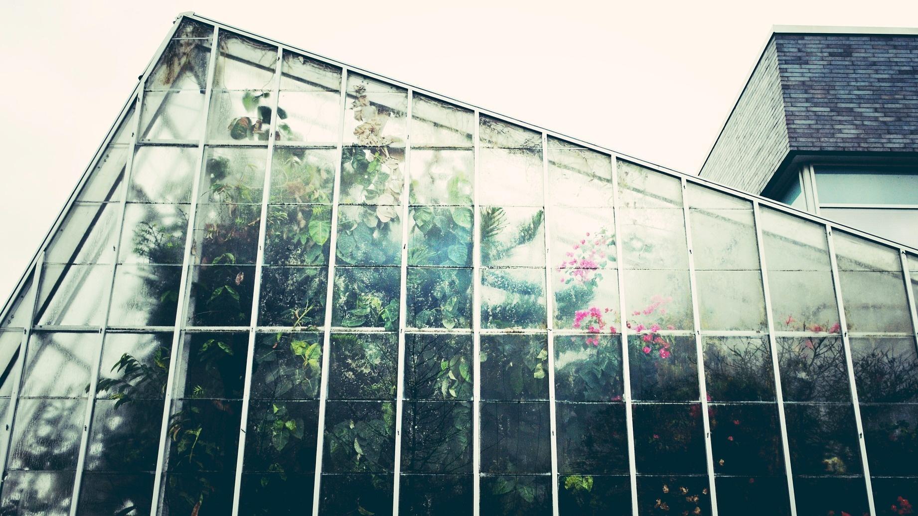 Gewächshaus einrichten: Die richtige Ausstattung für den Mini-Garten