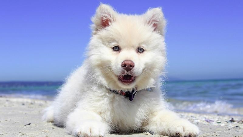 Amerikanische Hundenamen: 15 schöne Namen für Hunde