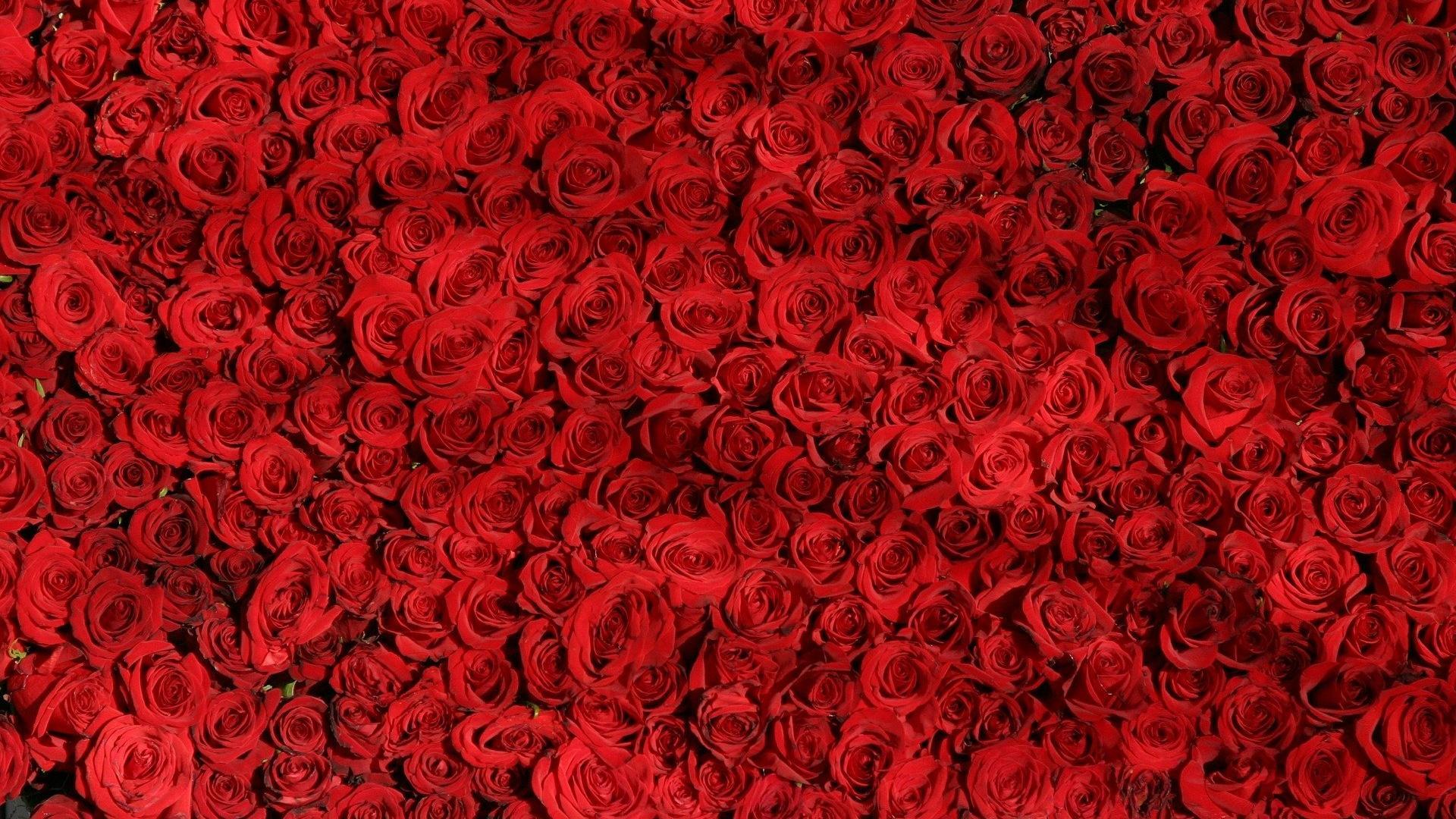 Rosen sind klassische Blumen für die Hochzeit