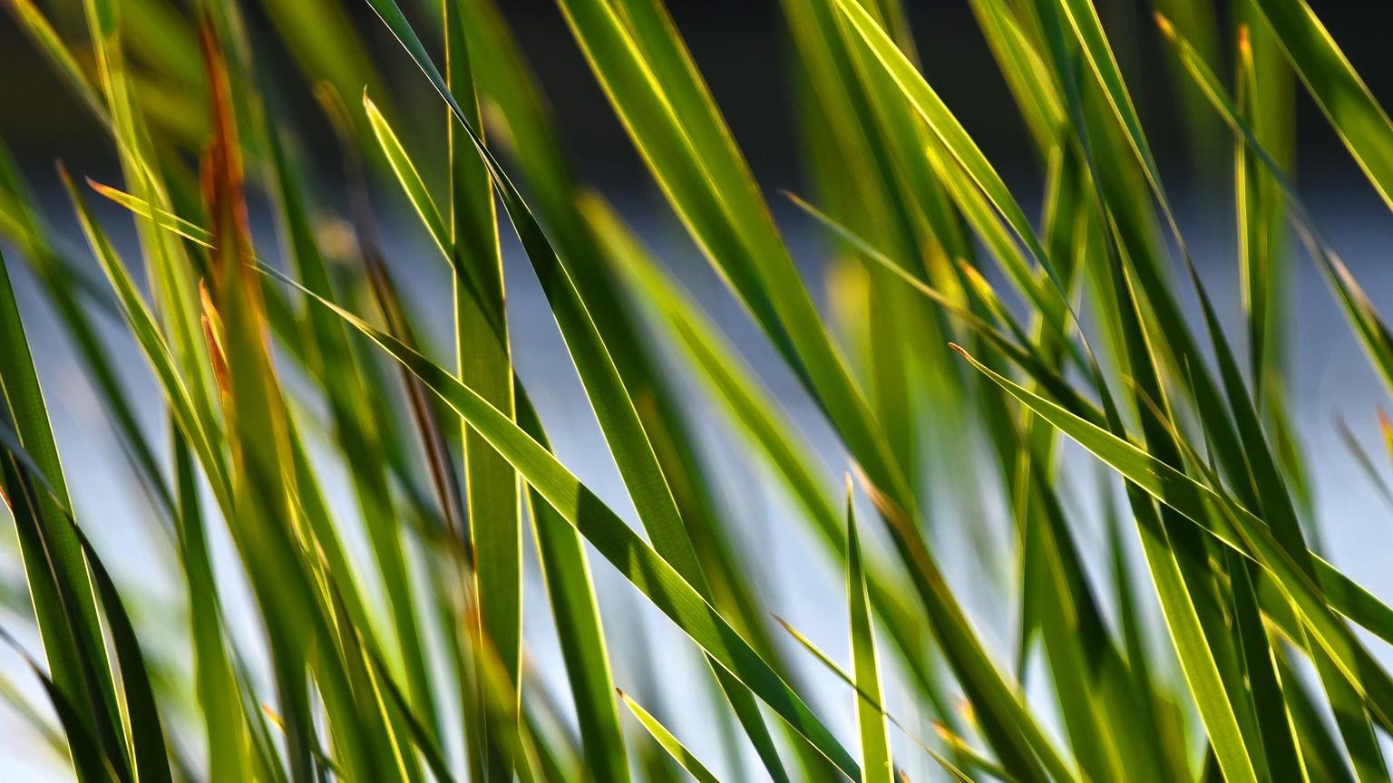 Wir erklären Ihnen, was eine Pflanzenkläranlage für Zuhause kostet.