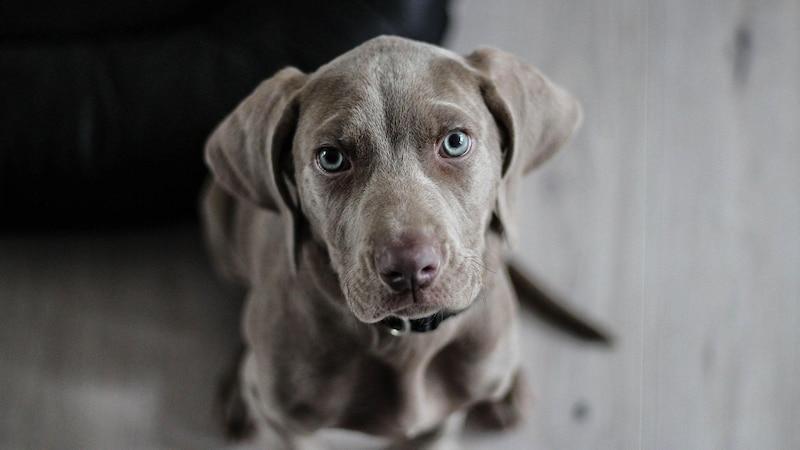 Russische Hundenamen: 20 Namen für den Hund