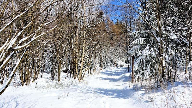 Thüringen lockt mit verschneiten Wäldern.