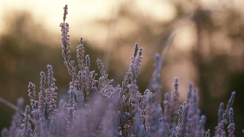 Frostschutz für Pflanzen: 5 clevere Methoden für den Winter